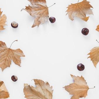 Сухая листва и орехи
