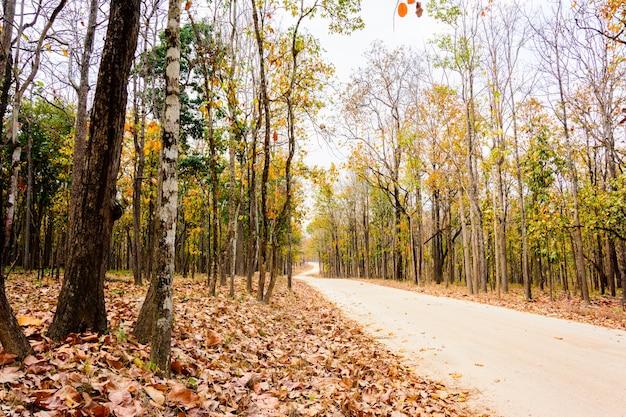 公園への道に沿って乾燥した森林