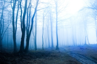 Dry forest with fog