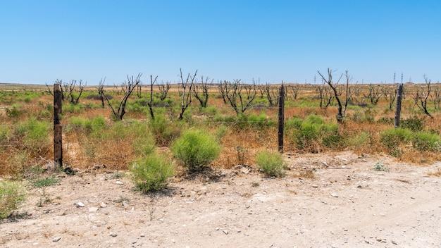 Dry garden in hot arid climates