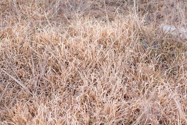 Dry grass as background.