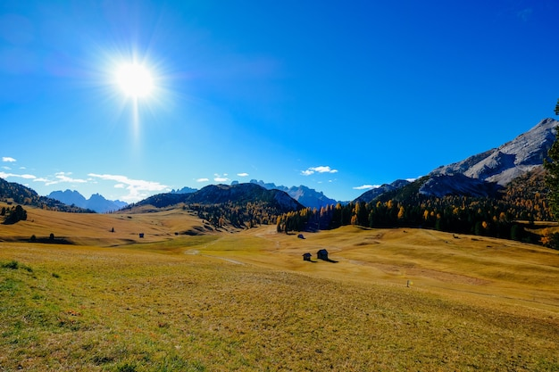 Dry grass field with tall trees and a mountain with the sun shining in the blue sky