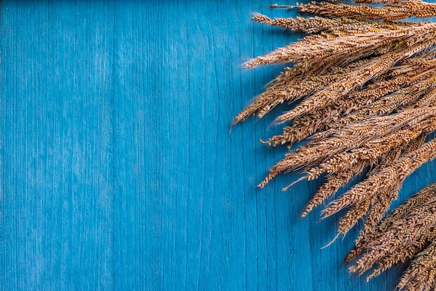 Dry grass flower on blue wooden background
