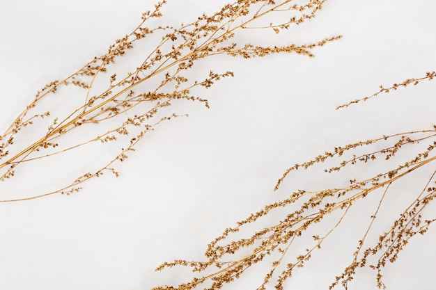 Dry grass golden colored on light background for wedding cards, valentines day or screensaver. minimal nature . horizontal format image.