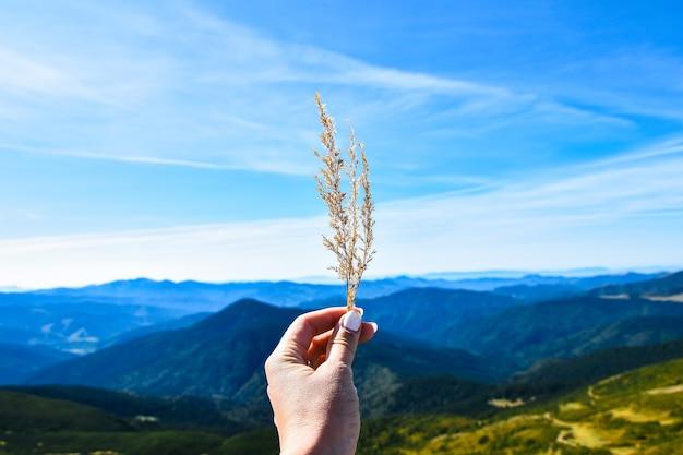 Сухая трава в руке женщины на фоне горного пейзажа и голубого неба. концепция свободы путешествий.