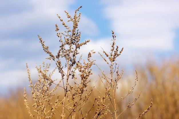 青い空を背景に乾いた草