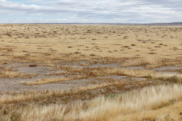 Dry grass in the steppe