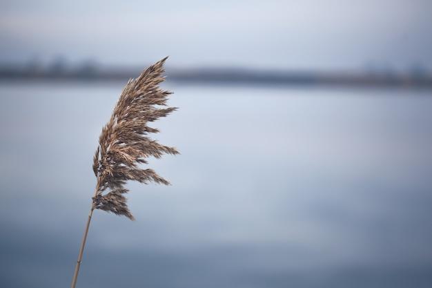 空の下で風に揺れる乾いた草