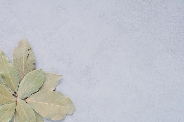 コンクリートの背景に乾燥した緑の月桂樹の葉。 無料写真
