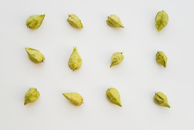 Dry green physalis on white background