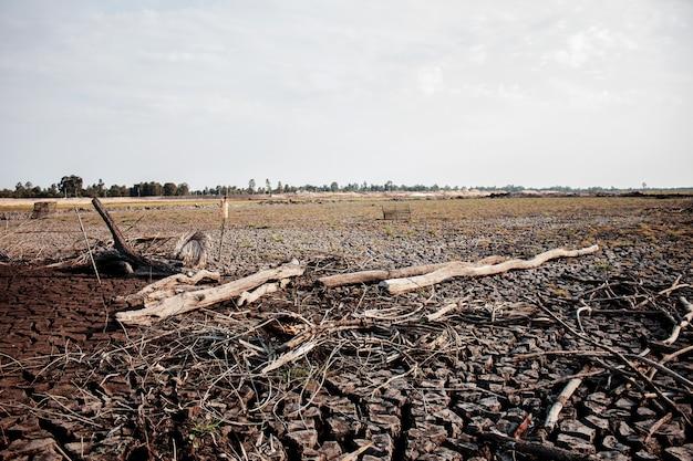 Сухая земля потрескалась и леса с восходом солнца летом.