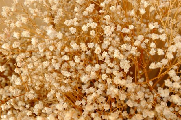 乾燥gypso花の背景、花の背景、ビンテージ背景