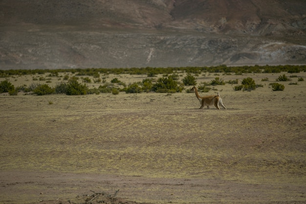 Cordillera real、アンデス、ボリビアの乾燥した風景