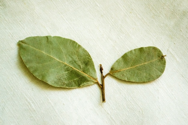 Dry laurel leaves top view