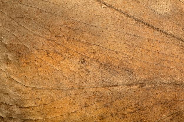 Сухой лист фоновой текстуры узор и поверхность сухих коричневых осенних листьев с прожилками ботанический макрос ...