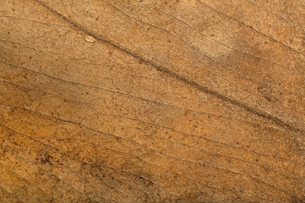 Dry leaf background texture pattern and surface of dry brown autumn leaf with veins botanical macro ...