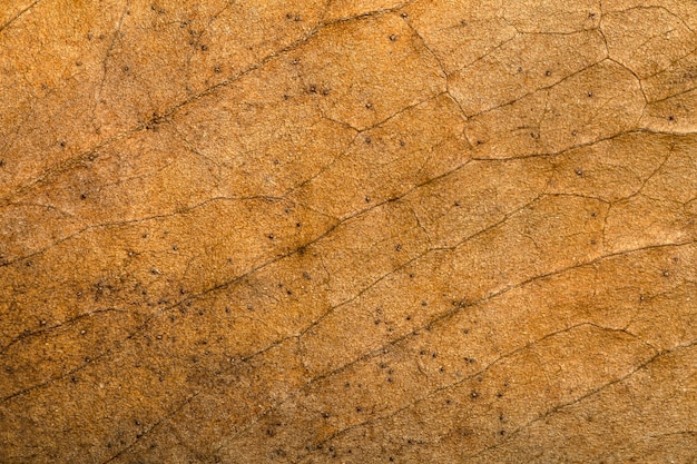 Dry leaf background texture pattern and surface of dry brown autumn leaf with veins
