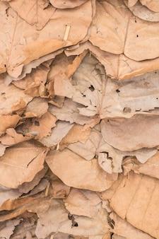 Dry leaf background