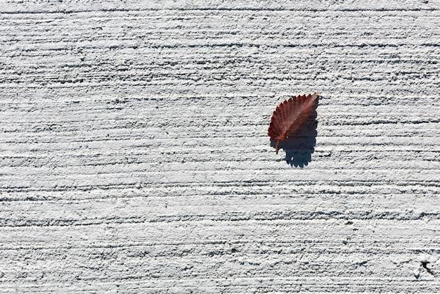 荒い白いコンクリートの地面で乾燥した葉