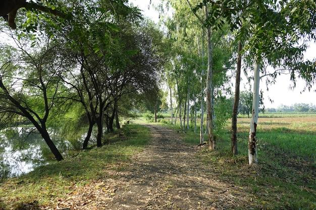 Strada asciutta foglia tra gli alberi