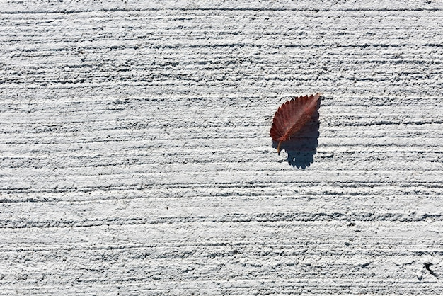 Dry leaf in a rough white concrete ground