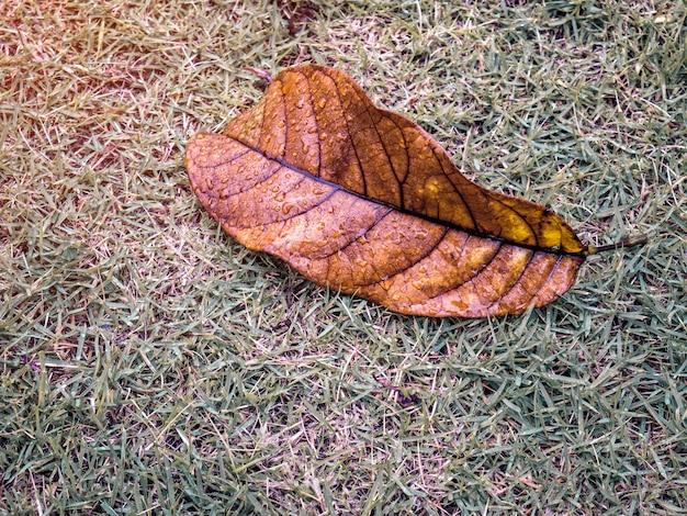 緑の庭の雨からの水滴のある乾燥した葉