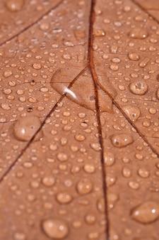 Сухой лист с каплями воды