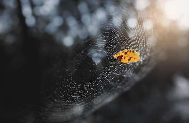 乾燥した葉はボロボロの穂軸クモの巣の上で休んで落ちました。