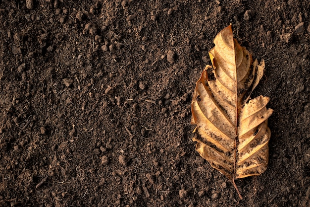 乾燥した葉は、栽培に適した肥沃な土壌に置かれます。