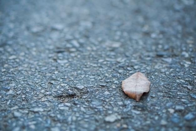 一人で、乾燥した葉が路上に置かれます。