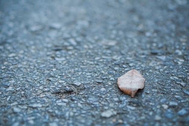 Dry leaves are placed on the road, alone.