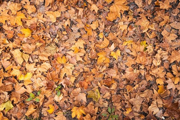 秋の乾燥した葉の背景