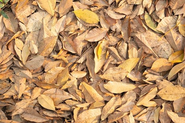 木から落ちる乾燥した葉。