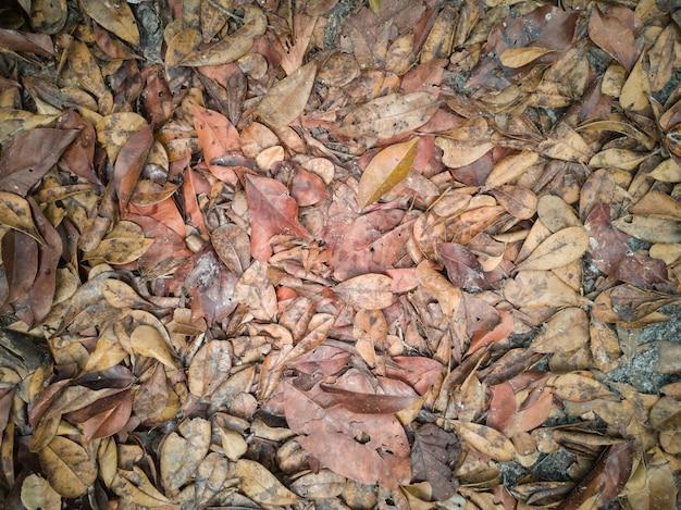 가을에 마른 잎이 땅에 떨어졌습니다.