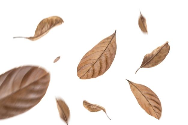 Сухие листья летают на белом фоне размытие изображения
