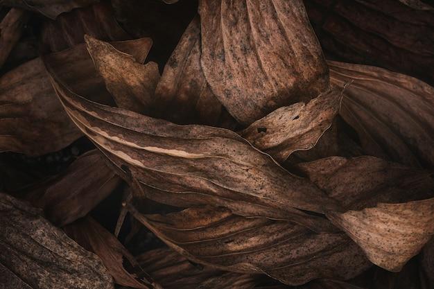 Сухие листья в темной природе, сдержанная.