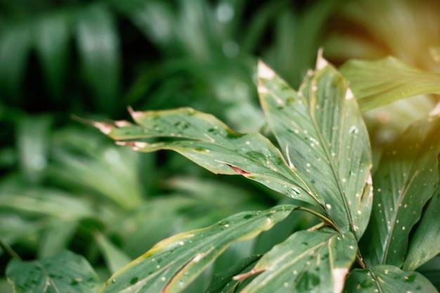 庭の乾燥葉。