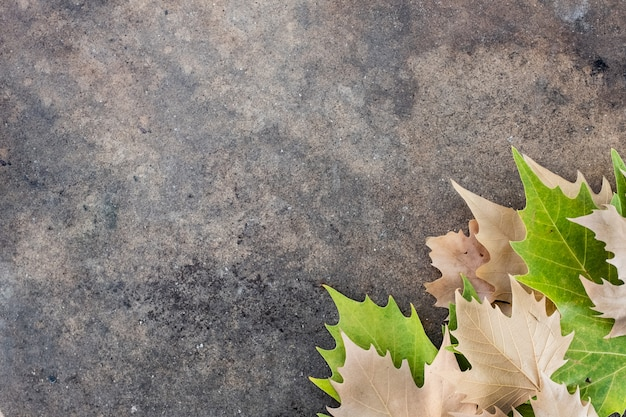 Dry leaves on the lower right edge of a table