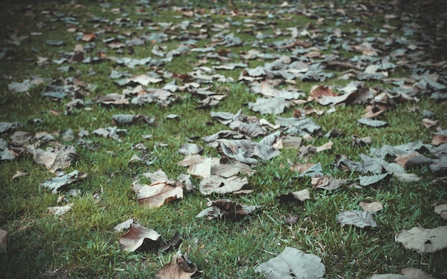Сухие листья на дворе