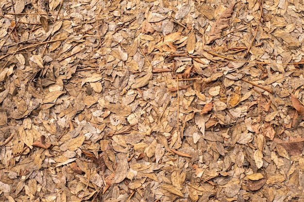 지상에 마른 잎 잎은 정원 숲에서 아름다움 패턴을 덮습니다. 가 여름에 나무를 단풍 배경 질감에 대 한 아름 다운 자연 색상입니다.