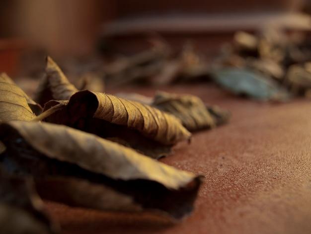갈색과 주황색의 그늘이 있는 지상의 마른 잎 여름과 가을에 낙엽이 떨어짐