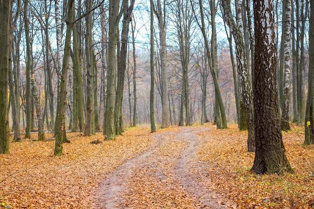 秋の森の道の乾燥した葉