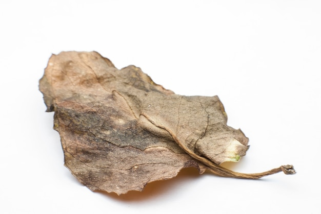 Dry leaves on a white background.