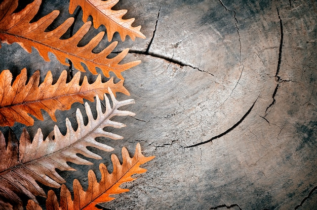 Dry leaves on wooden background, for nature background.