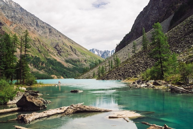 Dry logs float in water of mountain lake on giant mountains with vegetation of highlands.