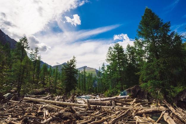 Dry logs float in water near conifer forest