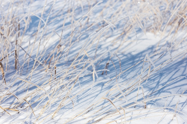 Сухие луговые цветы и трава покрыты иней в зимнем поле природа фон