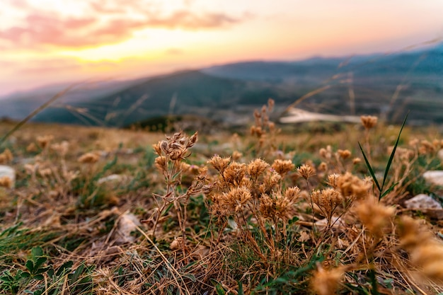 Dry mountain flowers in the sunset rays on the mountainside