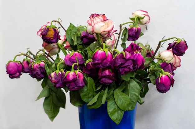 밝은 벽 앞에 있는 파란색 양동이나 용기에 여러 가지 빛깔의 장미를 말립니다. 휴일이 끝났습니다.