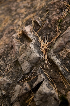 Dry needles on the ground and stones